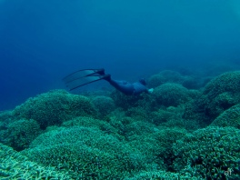 Kyla cruising over a bed of corals.